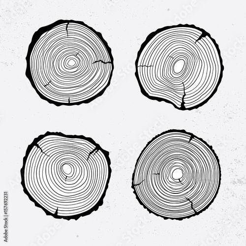 Fotografie, Obraz  Tree trunk cross section, line design, vector illustration