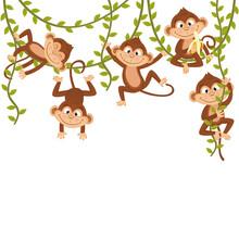 Monkey On Vine  - Vector Illustration, Eps