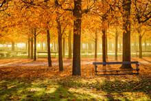 Saison D'automne Au Jardin Des...