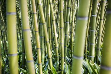 Bamboo stems in the gardens of Villa Melzi d'Eril in Bellagio, Lake Como, Lombardy, Italy.