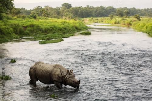 Spoed Foto op Canvas Neushoorn Big rhino in a river in Chitwan Park, Nepal