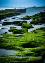 Algae Covered Rocks On Shoreline