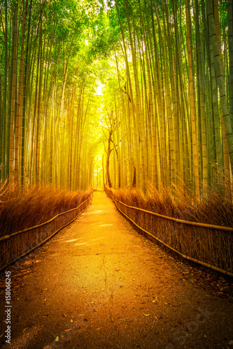 Path in bamboo grove, Sagano in Arashiyama at sunset. Kyoto forest is the second most popular tourist destination and famous phonetic stations in Japan. Meditative listening concept. Vertical shot.