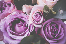 Fresh Pink Roses Macro Shot, S...