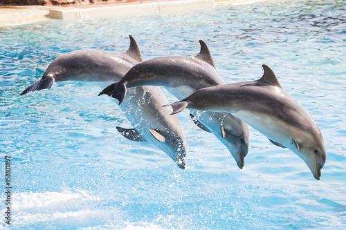 Foto op Plexiglas Dolfijnen Dolphins diving