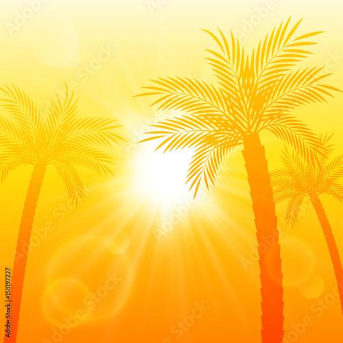 lato-tlo-z-sylwetki-drzewa-palmowego