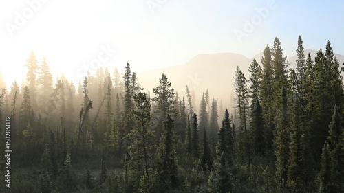 mglisty-las-tundra