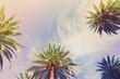 View of exotic tropical palm tree frame on blue sky background retro toned