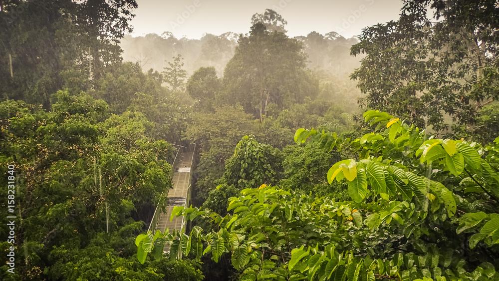 Fototapeta Rainforest wiew from the Canopy Walk Tower In Sepilok, Borneo