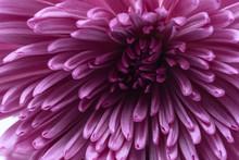 Macro Light Purple Flower