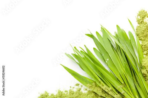 Fotomural Young barley grass.