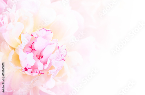 Foto op Canvas Bloemen Gentle pink peony flower close-up