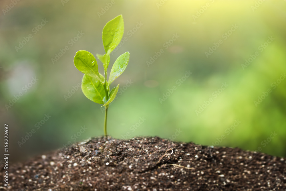 Fototapety, obrazy: Little Green Plant