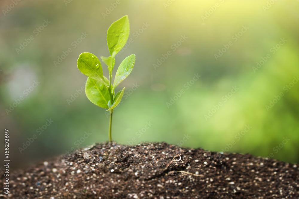 Fototapeta Little Green Plant