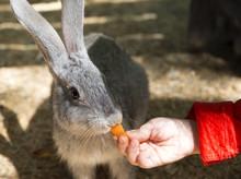 Children Feed Rabbit In сontact Petting Zoo