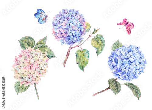 Leinwandbilder - Set of blooming watercolor branch hydrangeas and butterflies
