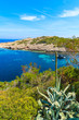 Agave plant growing on coast and view of boats on sea in Cala Portinatx bay, Ibiza island, Spain