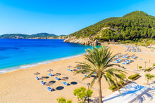 Palm Tree And Sun Loungers On Sandy Cala San Vicente Beach, Ibiza Island, Spain