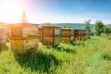 Hives In An Apiary With Bees F...