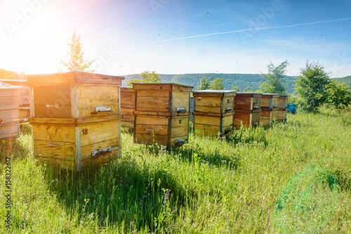Foto auf AluDibond Bienen Hives in an apiary with bees flying to the landing boards. Apiculture.