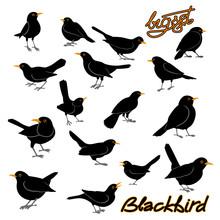 Blackbird Vector Illustration ...