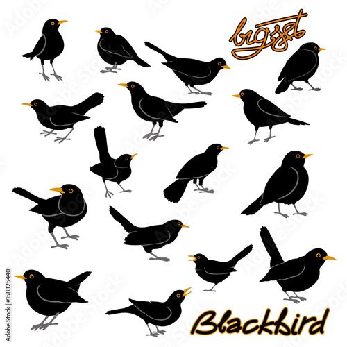 blackbird vector illustration style Flat big set Wallpaper Mural