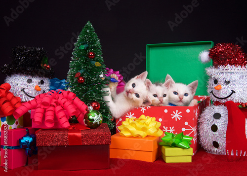 three fluffy white kittens in a holiday box next to a tiny christmas tree surrounded by brightly colored presents with bows one kitten holding tree light