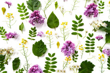 Pattern Made From Natural Plants And Lilac Flowers On A White Background..