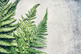 Fototapeta Bedroom - Beautiful Fern leaves on gray concrete background, place for text