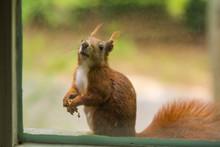 A Squirrel Sitting On A Window...
