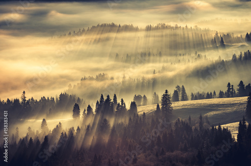 Canvas Prints Morning with fog Misty mountain forest landscape in the morning, Poland