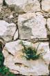 Fondo de pared de piedra con plantas saliendo de sus agujeros