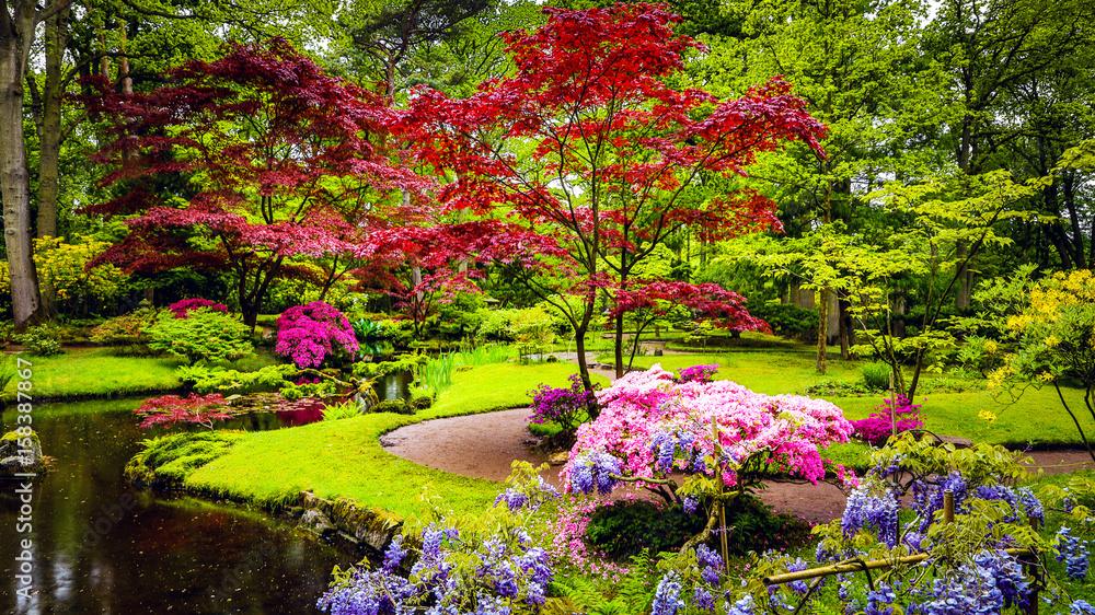 Fototapeta Traditional Japanese Garden in The Hague.