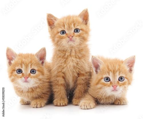 Naklejki koty   trzy-czerwone-koty
