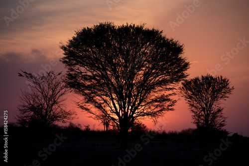 Serengeti sunset trees