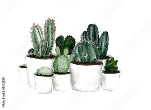 Plissee mit Motiv - Watercolor green cactus set in white pots (von Darina)
