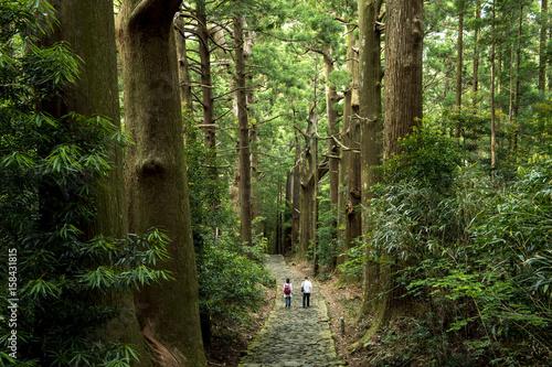 Fotografia, Obraz 熊野古道、大門坂