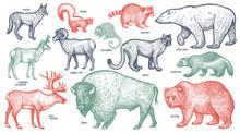 Animals Of North America.