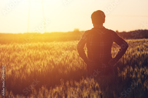 Fototapeta Concerned female agronomist standing in cultivated wheat crops field obraz