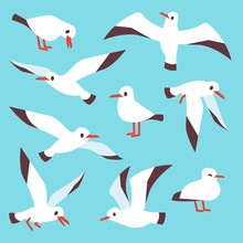 Cartoon Atlantic Seabird, Seag...