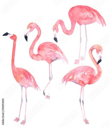 Canvas Prints Flamingo Bird Set watercolor random flamingos. Isolated illustration