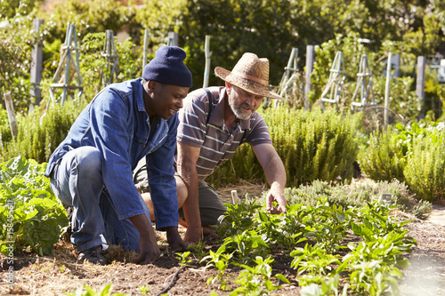 Two Men Working Together On Community Allotment Canvas Print