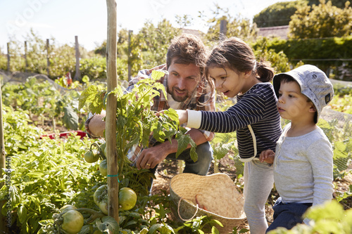 Father And Children Looking At Tomatoes Growing On Allotment Canvas Print