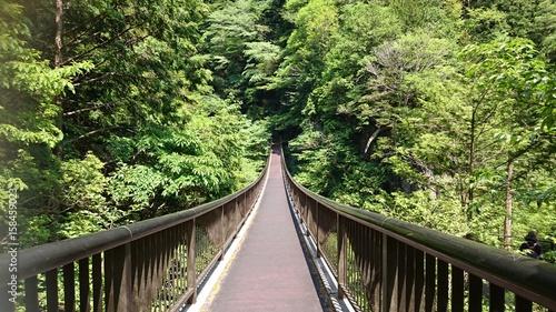 Canvas Prints Bridge 新緑の山の中へ