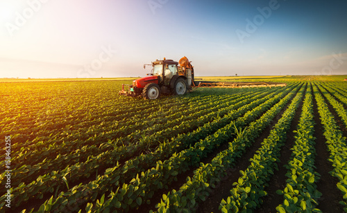 Photo  Tractor spraying soybean field at spring