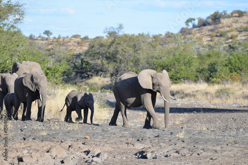 Garden Poster Bestsellers Elefant
