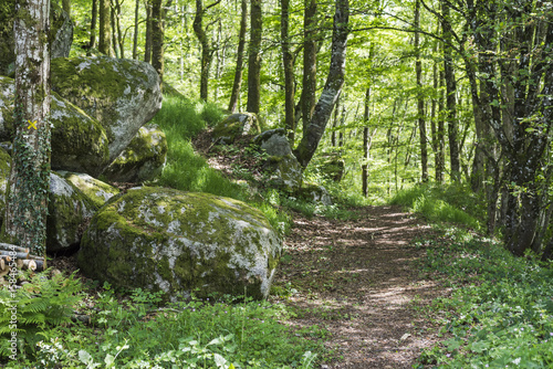 Forêt du Morvan, Bourgogne, France, Uchon Wallpaper Mural