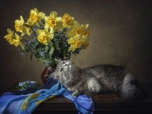 A Kitten And A Bouquet Of Yell...