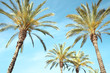 Travel, tourism, vacation, nature and summer holidays concept - palm trees on a blue sky background
