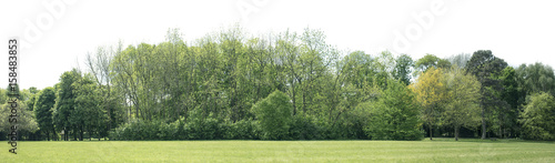In de dag Khaki High definition Treeline isolated on a white background